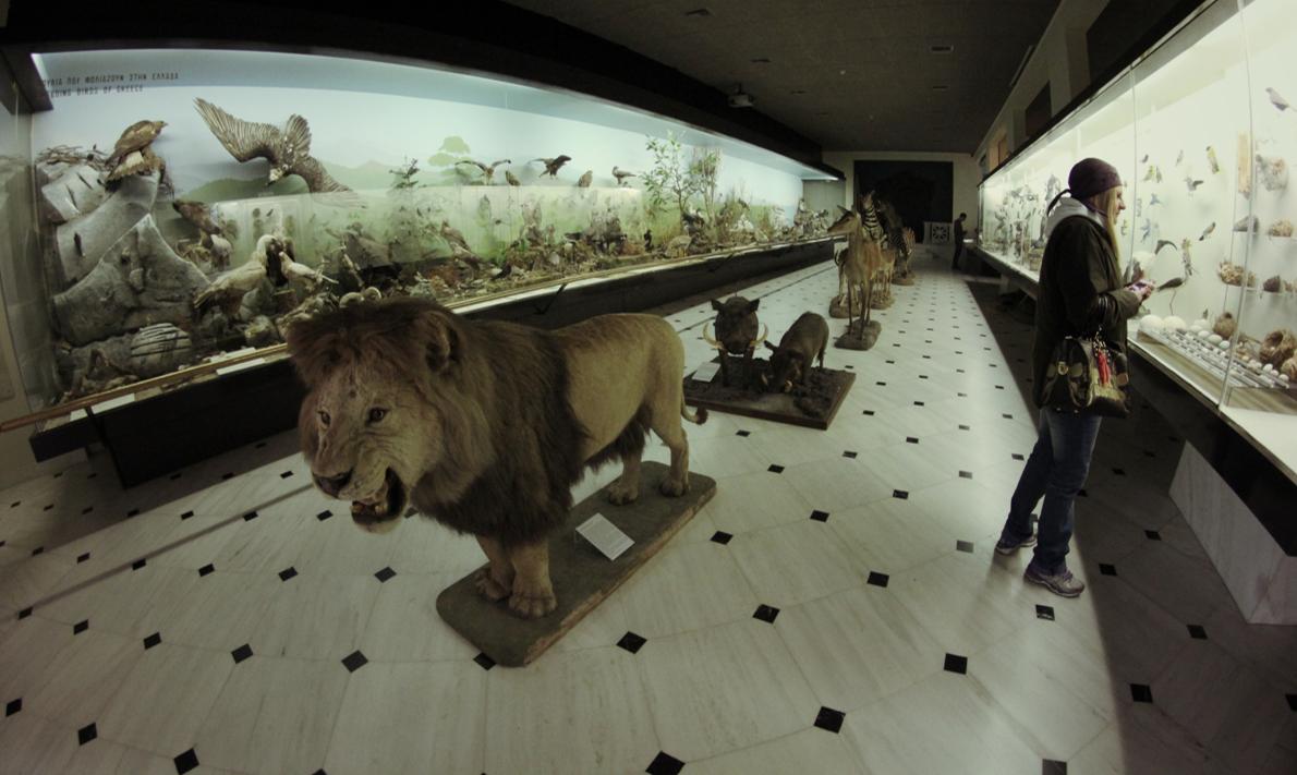 Innovative Museum Applications